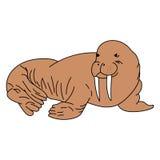Ausführliche Illustration eines Walrosss Stockbild