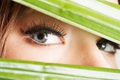 Ausführliche Nahaufnahme des Auges der Frau zwischen grünem Material. Stockfotografie