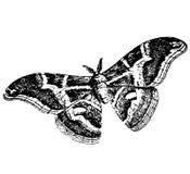 Ausführliche Skizze einer Schmetterlingstätowierung Stockfoto