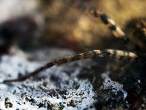 Ausführliche Spinne mustert Makro stockbilder