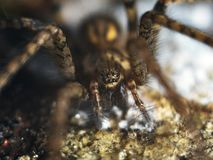 Ausführliche Spinne mustert Makro lizenzfreie stockbilder