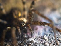 Ausführliche Spinne mustert Makro lizenzfreies stockbild