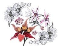 Ausführliche vektorzeichnung Farbige und Schwarzweiss-Blendenblume Aquarellblumenstrauß Kaninchen mit einem Geschenk stock abbildung