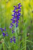 Ausführlicher Abschluss oben einer lila Orchideenblume lizenzfreie stockfotos