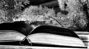 Ausführliches Buch auf dem Hintergrund des Seepanoramas mit gefallenen Bäumen stockfotos