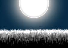 Ausführliches Gras verlässt auf einem Nachtmondhimmel Stockfoto