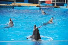 Ausführung des Delphins stockfotografie
