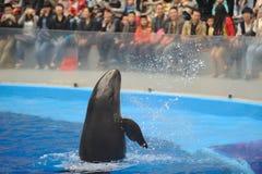Ausführung des Delphins stockfotos