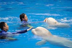 Ausführung des Delphins lizenzfreies stockfoto