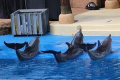 Ausführung mit drei Delphinen Stockbild