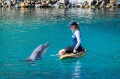 Ausführung von Delphinen an der Seewelt auf dem Gold Coast lizenzfreie stockbilder
