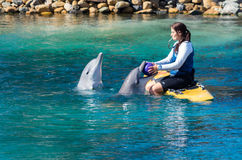 Ausführung von Delphinen an der Seewelt auf dem Gold Coast lizenzfreie stockfotografie