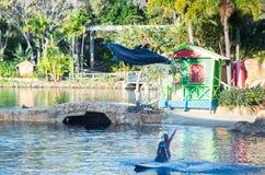 Ausführung von Delphinen an der Seewelt auf dem Gold Coast stockfotografie