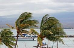 Ausflug-Boots-und Palmen Lizenzfreie Stockbilder