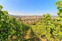 Ausgang-Einkaufsstadt Metzingen umgeben durch Weinberge stockbild