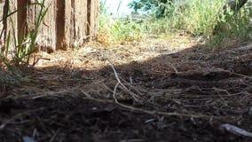 Ausgang vom Altbau - Ansicht vom Boden stock video footage