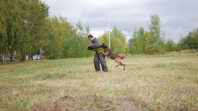 Ausgebildete SchäferhundHundebisse in einem Arm, den der Mann in einem Schutz entsprechen lizenzfreie stockfotos