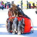 Ausgebildeter Adler, der auf Pelzen sitzt Im Hintergrund Stockfotografie