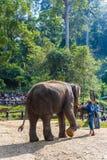 Ausgebildeter Elefant, der mit einem Ball spielt stockfotografie