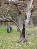 Ausgebrannter Baum Lizenzfreies Stockfoto