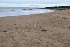 Ausgedehnter Strand Stockfoto