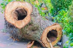 Ausgehöhlter-heraus Baumstamm Stockfoto
