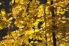 Ausgereifter Herbst Lizenzfreie Stockfotos