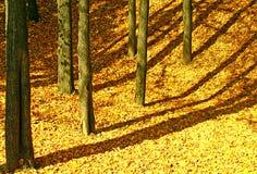 Ausgereifter Herbst. stockfotografie