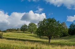 Ausgerichtete Bäume stockfoto