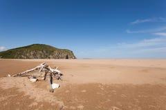 Ausgestoßene Seewelle auf dem Sandstrandbaum Mit gelbem Sand und blauer Himmel Fokus in Richtung zu den niedrigeren und mittleren Lizenzfreie Stockfotos
