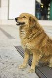 Ausgestossenhund Stockfotografie