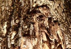 Ausgetrockneter und knackender Baumrindebeschaffenheitshintergrund Stockfotos