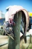 Ausgeweidete Fische auf Pfosten lizenzfreie stockbilder