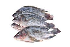 Ausgeweidete und eingestufte Nile Tilapia-Fische auf weißem Hintergrund Stockfotos