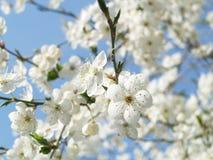Ausgezeichnete weiße Blumen Lizenzfreie Stockbilder