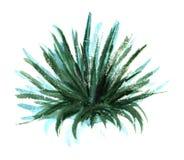 Ausgezeichneter kugelf?rmiger Busch des Grases oder des Palme Yuccas oder des beshorneriya Von Hand gezeichnete Aquarellskizzenil stock abbildung