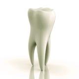 Ausgezeichneter weißer Zahn auf einem weißen Hintergrund Stockfotos