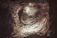 Aushöhlungen, versteinert, Untertage Skelett von einem alten Scolopendra gefunden während der Untertageaushöhlungen lizenzfreie stockbilder