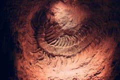 Aush?hlungen, versteinert, Untertage Skelett von einem alten Scolopendra gefunden w?hrend der Untertageaush?hlungen lizenzfreies stockfoto