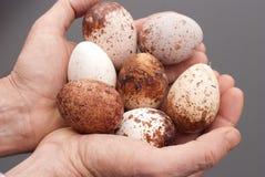 Ausländische Eier in den Händen. Stockfotos