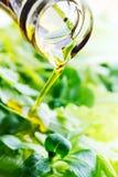 Auslaufendes Öl auf Feldsalat Stockfoto