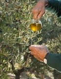 Auslaufendes Olivenöl Stockfoto