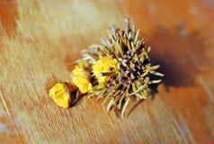 Auslese Dragon Pearl Tea Flower Lizenzfreie Stockfotos