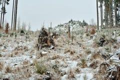 Ausnutzung von Wäldern lizenzfreies stockfoto