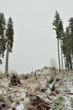 Ausnutzung von Wäldern stockfoto