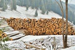 Ausnutzung von Wäldern stockfotos