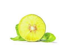 Ausschneiden und einfügen, Lindenblätter auf einem weißen Hintergrund Lizenzfreies Stockbild
