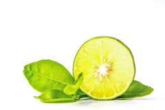 Ausschneiden und einfügen, Lindenblätter auf einem weißen Hintergrund Stockfoto
