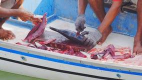 Ausschnitt Dogtooth-Thunfisch stockfotografie