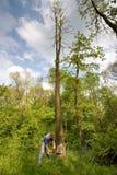 Ausschnittbaum des jungen Mannes Stockfoto